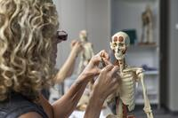 Northwestern Health Sciences University student working in an anatomy class