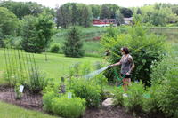 Student watering the herb garden