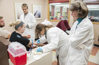 Northwestern Health Sciences University students practice blood draws