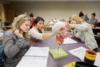Students working with head and neck model