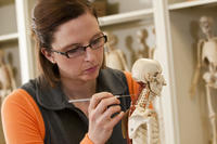 Student working with anatomy model