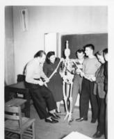 Northwestern College of Chiropractic students examining a skeleton